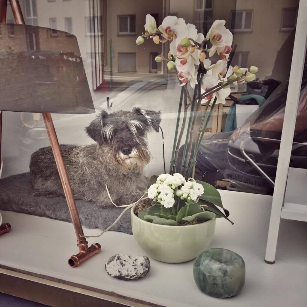 Salonhund Betje